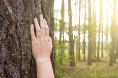 A young woman holds her hand on the trunk of a tree in the fores Royalty Free Stock Photos