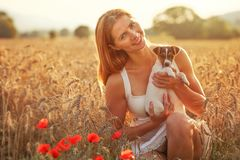 Young woman holds Jack Russell terrier puppy on her hands, red poppies in foreground, sunset lit wheat field behind stock photos