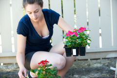 Young woman holds small crate of flowers. In the shade Stock Image
