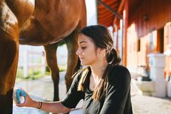 Young woman with horse stock photos