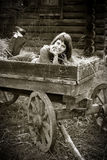 Young woman in horse cart Stock Photos