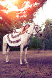 Young woman on a horse. Horseback rider, woman riding horse Royalty Free Stock Photography