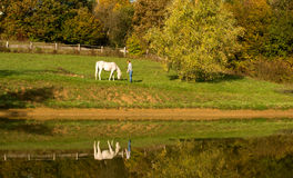 Young woman with horse in the lake Stock Images