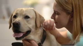 Young woman hugging dog, emotional pet connection, happy labrador owner, love. Stock footage stock video footage