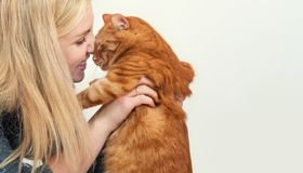 Young woman hugging her beautiful redhead cat.Love to the animal. stock images