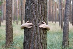 A young woman hugging a tree trunk in a forest Stock Images
