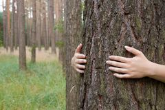 A young woman hugging a tree trunk in a forest in summer day Stock Photos