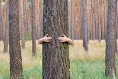 A young woman hugging a tree trunk in a forest in summer day Stock Photo