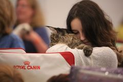A young woman hugs a Maine Coon kitten with love royalty free stock photo