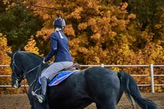 Young woman jockey in white blue dress and black boots  takes part in equestrian competitions.  royalty free stock image