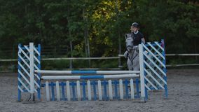 Young woman jumps horse over an obstacle during her training in an arena. Young woman jumps horse over an obstacle stock video footage