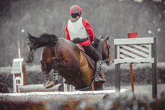 Young woman jumps a horse during practice on cross country eventing course, duotone art Royalty Free Stock Photography