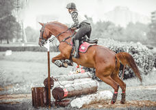 Young woman jumps a horse during practice on cross country eventing course, duotone art Royalty Free Stock Image