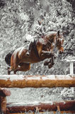 Young woman jumps a horse during practice on cross country eventing course, duotone art Stock Photos