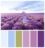 Young woman in lavender field. Natural color palette. For interior or fashion design and art royalty free stock photo