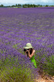 Young woman in lavender field photographing in Provence, France. Stock Photography