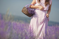 Young woman in lavender field Stock Photography