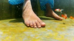 Young woman leg closeup shot, woman playing on gold fish in underwater shot. Young woman playing on gold fish in underwater closeup leg shot stock video footage