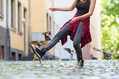 Young woman lets her small dog jumping over the leg Royalty Free Stock Image