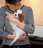 Young woman with puppy. Young woman with little Cavalier King Charles Spaniel dog Stock Photos