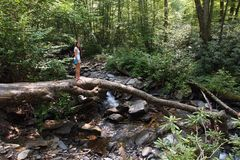 Young woman on log by a Smoky Mountains creek. royalty free stock photo
