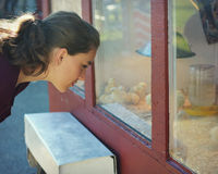 Young Woman looking at Baby Chicks Stock Image