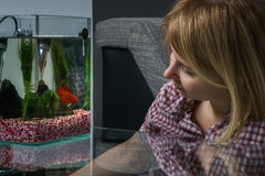 Young woman looking at beta fish in aquarium at home. Royalty Free Stock Image