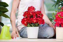 The young woman looking after plants at home Royalty Free Stock Image