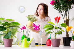 The young woman looking after plants at home Stock Photos