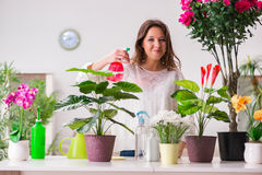 The young woman looking after plants at home Royalty Free Stock Images