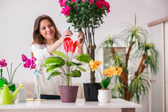 The young woman looking after plants at home Stock Images