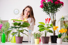 The young woman looking after plants at home Stock Photo