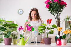 The young woman looking after plants at home Royalty Free Stock Photography