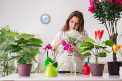 The young woman looking after plants at home Stock Image
