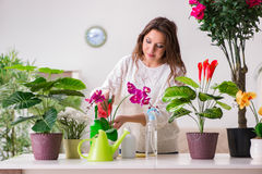 The young woman looking after plants at home Royalty Free Stock Photos