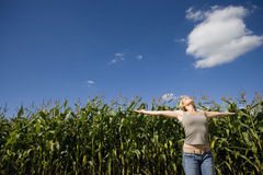 Young woman looking up with arms outstretched by corn field, low angle view Stock Image