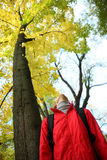 Young woman looking up through golden trees Stock Photo