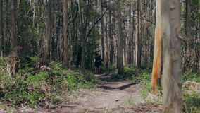 Young woman and man doing trail. Young woman and man participating in a trail race through the forest stock video footage