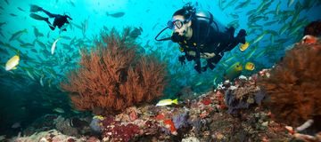 Young woman and man scuba divers exploring. Coral reef. Underwater sport and leasure activities stock photos