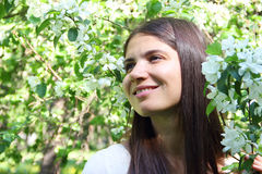 Young woman near apple tree Royalty Free Stock Photo