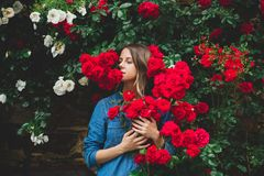 Young woman near the bush of red roses in a garden royalty free stock photos