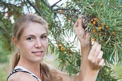 Young woman near a bush of sea-buckthorn Stock Image