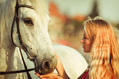 Young woman near the horse Stock Photography