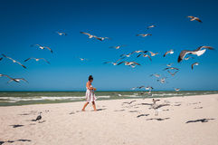 Woman feeding a flock of seagulls on a beach Stock Photos