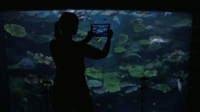 Young woman at the oceanarium take pictures of fish. Young woman at the oceanarium take pictures on her tablet of many tropical fish. After photography she is stock video footage