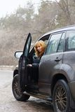 Young woman opened her car door and looking back. Young redhead woman open door of her dirty SUV car and looking back Stock Photography