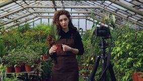 Young woman owner of hothouse is recording video about gardening for her videoblog standing in greenhouse and holding. Young pretty woman owner of hothouse is stock video footage