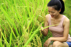 Young woman at paddy field Royalty Free Stock Photos