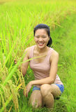 Young  woman in paddy field Stock Photography