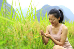 Young  woman in paddy field Stock Photos